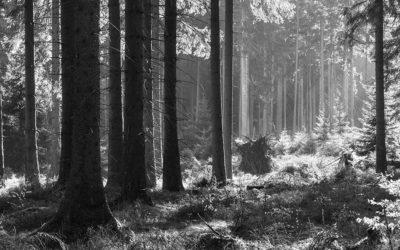 Le Groupe Cofibel investit durablement dans la forêt avec EcoTree
