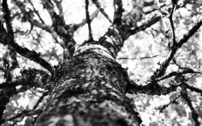 Mille arbres plantés et gérés durablement pour le Groupe Cofibel avec EcoTree
